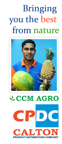Fruits Exporters in Sri Lanka, Vegetable Exporters in Sri Lanka